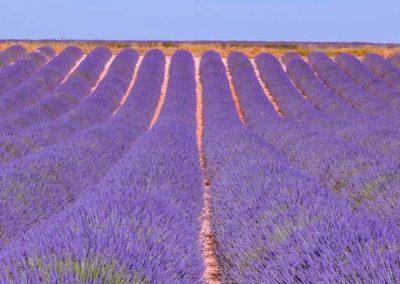 B2 Forcalquier les Mees Valensole